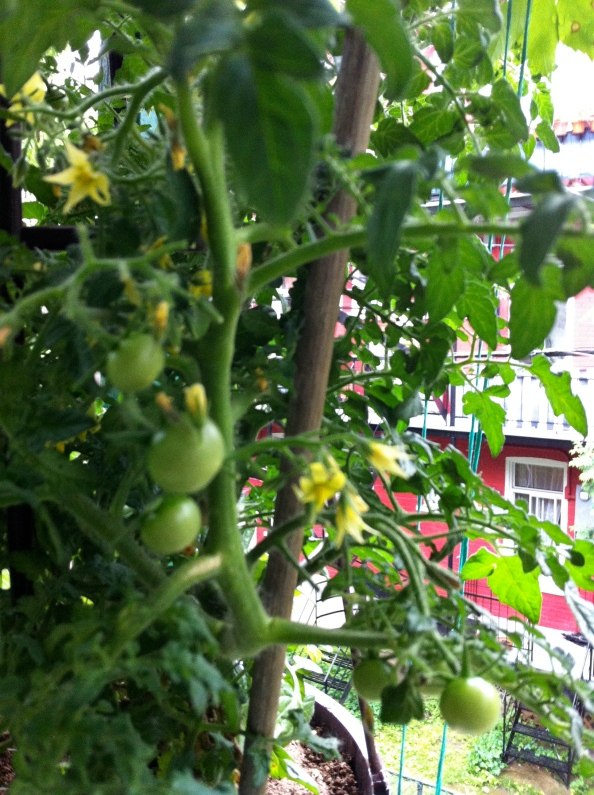 Les plus belles tomates dumonde